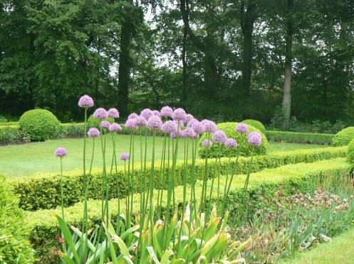 pour admirer de près les fleurs d'ail, modestes de nom mais majestueux de port et de beauté