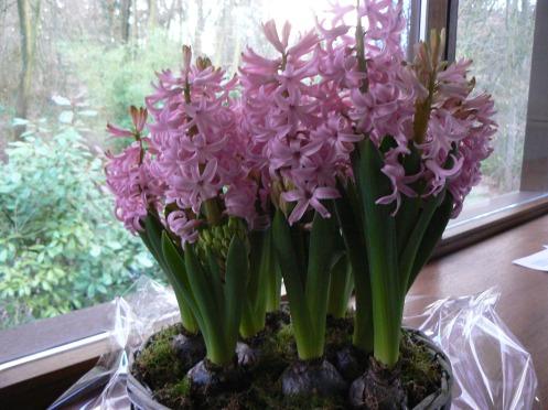 Voici le panier de fleurs que mon petit-fils m'a apporté