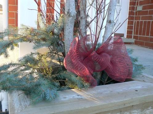Hiện đang mùa Giáng sinh, nhà nào cũng trang hoàng trước nhà. Ở đây, chỉ một cái nơ hồng dước bụi cây là đủ thêm vào không khí lễ hội trước sân nhà