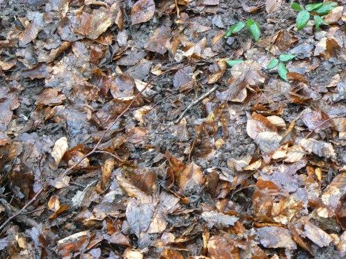 Sau khi lấp và nén  đàng hoàng, vài tháng sau rác thực vật sẽ thành đẫt mùn màu mỡ để bón cho cây cảnh trong vườn