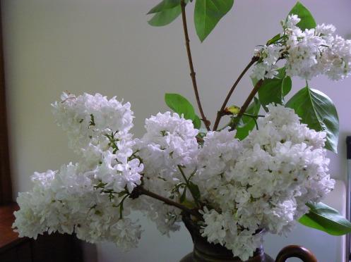 Hoa lila màu trắng tinh khôi